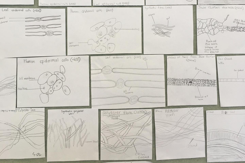 Year 8/9 Scientific Drawings