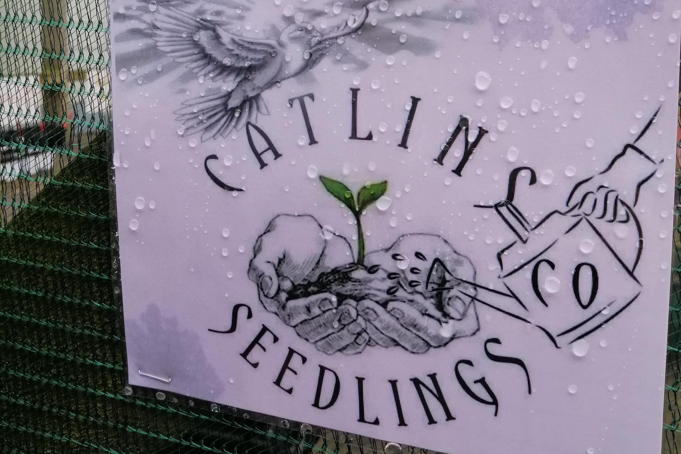 Seedling5